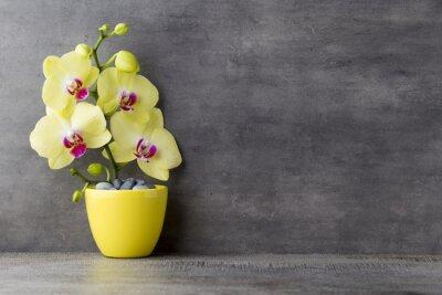 Картина Желтый орхидеи на сером фоне.