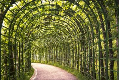 Фотообои Красивая зеленая аркада в парке с путём.
