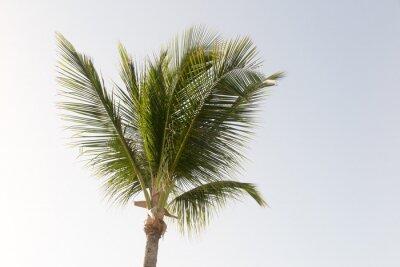 Фотообои Кокосовая пальма и голубое небо