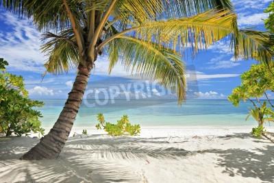 Фотообои Сцена из пальмовых деревьев и песчаный пляж на Мальдивах Исландии