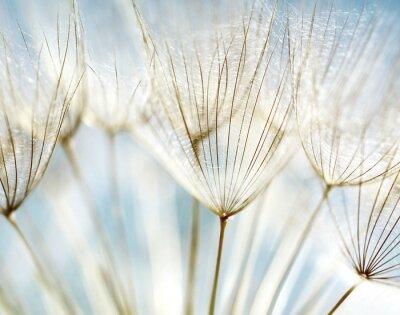 Фотообои Абстрактные одуванчика цветок фон