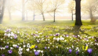 Фотообои абстрактный солнечный прекрасный весенний фон