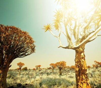 Фотообои Африканские пейзажи
