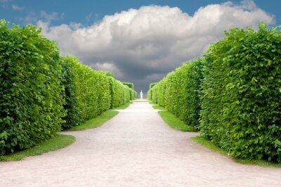 Фотообои Аллея в парке с подстриженными деревьями точно