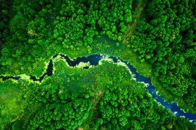 Фотообои Amazing blooming algae on green river, aerial view