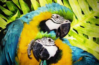 Фотообои Ара Parrot