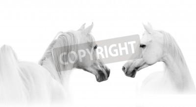 Фотообои Арабское белый конь