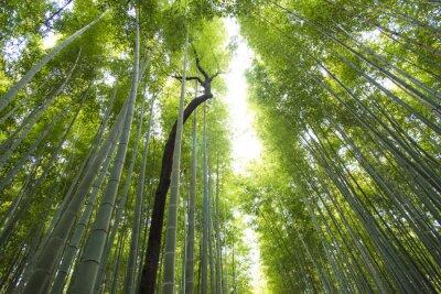 Фотообои Арашияма бамбуковый лес в Киото Япония