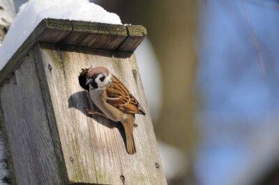 Фотообои В зимний период отделки дерева Воробей исследует возможные ВВСКИ гнезда