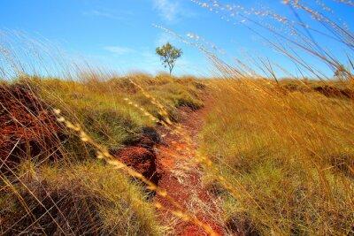 Фотообои Австралийский Outback