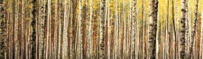 Фотообои панорама лес пейзаж осень береза