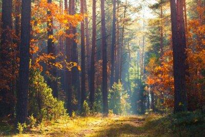 Фотообои Осенняя лесная сцена