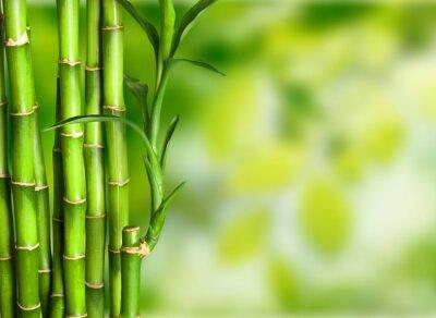 Фотообои Bamboo.