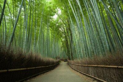 Фотообои Бамбуковые леса путь, Киото, Япония