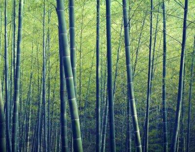 Фотообои Бамбуковый лес деревья природа понятия