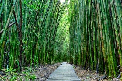 Фотообои Bamboo Форрест