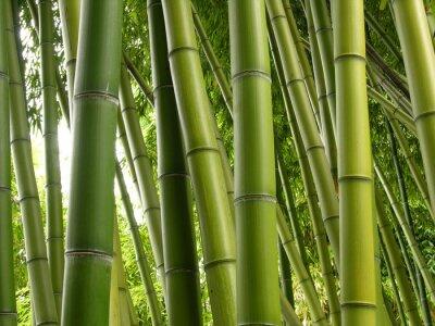 Фотообои Bamboo Jungle