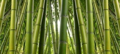 Фотообои Bamboo Джунгли