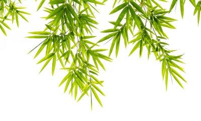 Фотообои Бамбук листья изолированные на белом фоне
