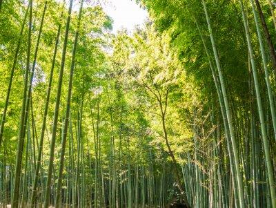 Фотообои путь из бамбука