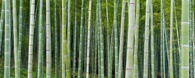 Фотообои Bambuseae