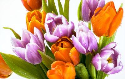 Фотообои Красивый букет фиолетовых и красных тюльпанов на белом фоне