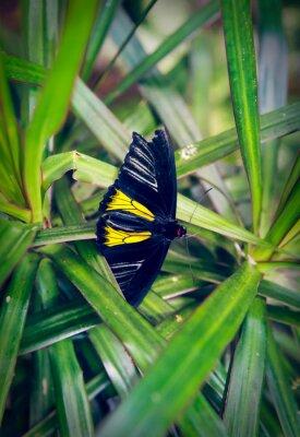 Фотообои Красивая бабочка сидит на большом листе