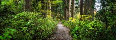 Фотообои Beautiful forest path as panorama background