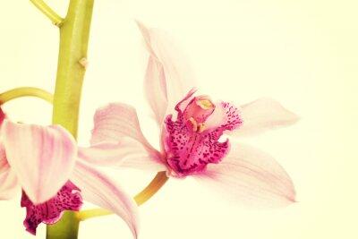 Фотообои Красивые свежие розовые лилии.
