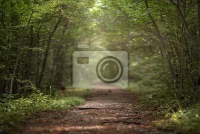 Фотообои Красивый зеленый летний лес. Весенний фон, фон