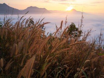 Фотообои Красивый пейзаж много тумана Phu Thok