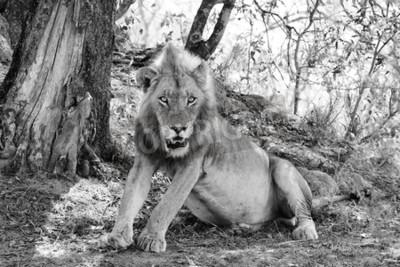 Фотообои Прекрасный лев