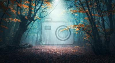 Фотообои Красивый мистический лес в голубом тумане в осени. Красочный пейзаж с заколдованными деревьями с оранжевыми и красными листьями. Пейзаж с пути в мечтательный туманный лес. Цвета осени в октябре. Приро