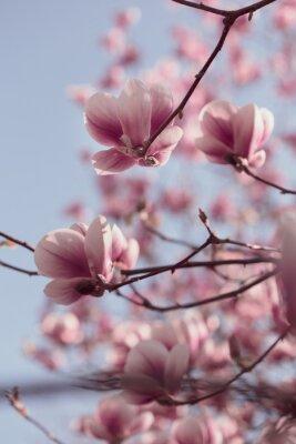 Фотообои Красивые розовые цветы магнолии