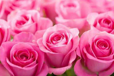 Фотообои красивый розовый розовыми цветами фона