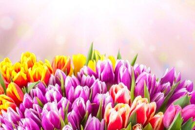 Фотообои Красивые тюльпан цветы