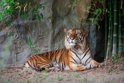 Фотообои Бенгальский тигр в лесу