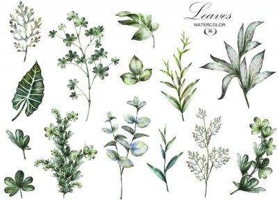 Фотообои Большие элементы Набор акварельных - травы, листьев. коллекция садовых и диких трав, листьев, веток, иллюстрация на белом фоне, эвкалипта, экзотических, тропических листьев. зеленый