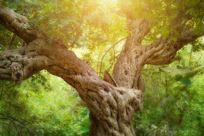 Фотообои Большой дерево в лесу