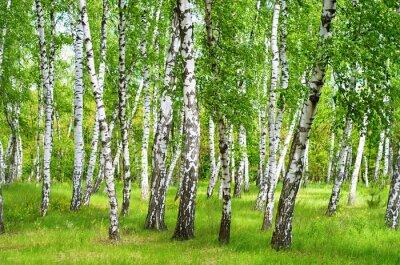 Фотообои Birchgrove