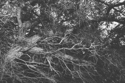 Фотообои Черно-белый закрыть на скрученных ветвей безлистных. Органические б