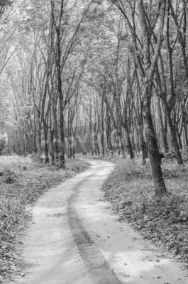 Фотообои Черно-белый путь в лес