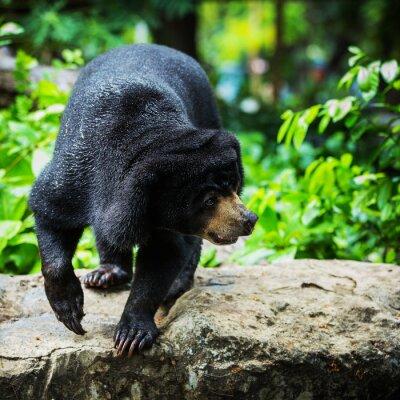 Фотообои Черные медведи