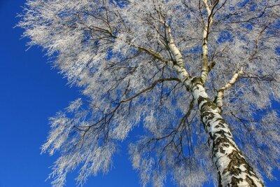 Фотообои Blick в ден Winterhimmel
