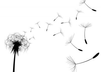 Фотообои Удар Одуванчик на белом фоне