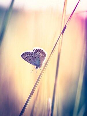 Фотообои Голубая бабочка на траве