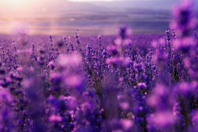 Фотообои размытым фон лето диких трав и цветов лаванды
