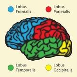Epilepsia del lobulo temporal pdf free download