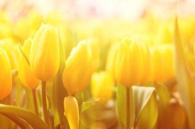 Фотообои Яркий цветочный фон с желтыми тюльпанами и эффект солнечного света