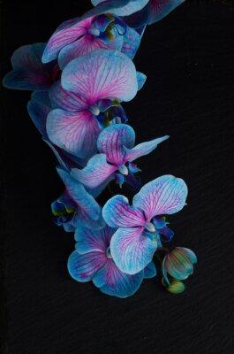 Фотообои Букет из фиолетовых орхидей